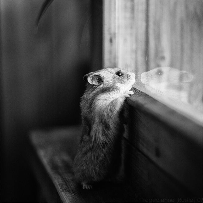 .: Animal Baby, Window, Animal Photography, Pet, Houses Mouse, Hamsters, Bw Photography, Baby Animal, Go Outside