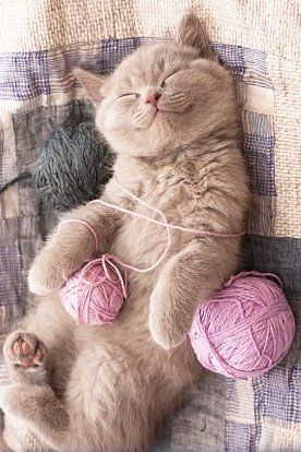 kitten sleeping with a ball of yarn