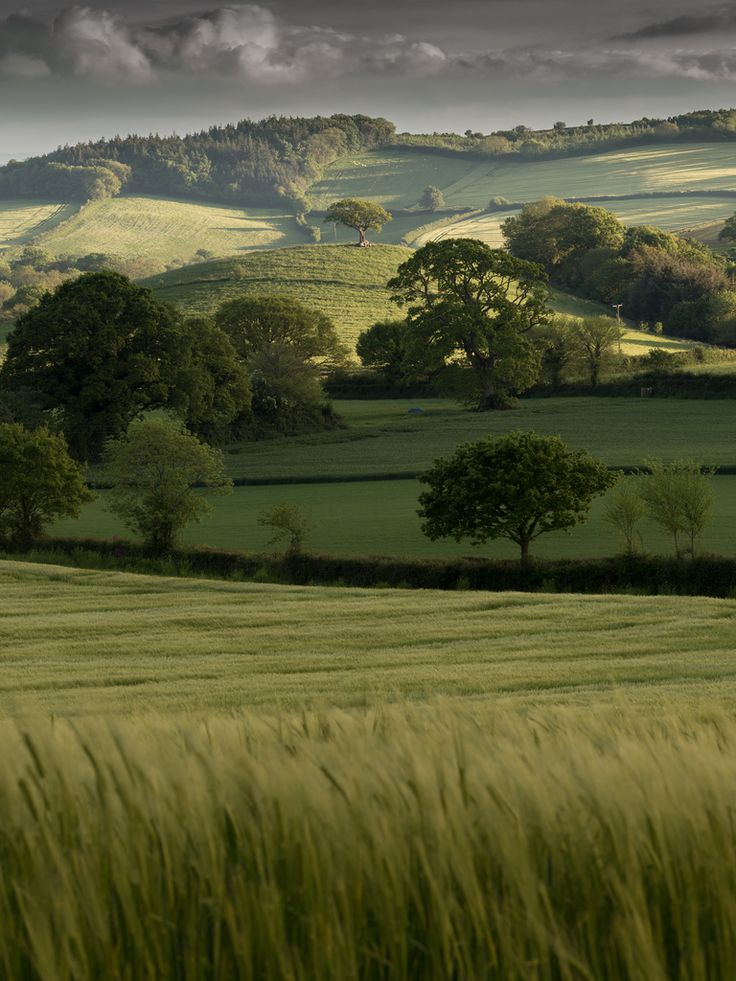 to go: Rolling Hills of Devon, England