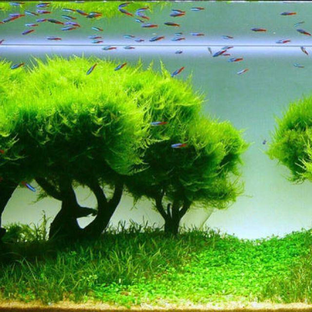 25+ Best Aquascaping Ideas On Pinterest