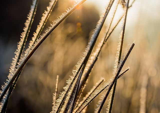 Frost-art   by Gilbert de Bruijn