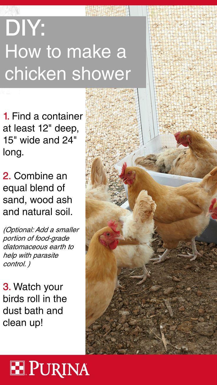 De 25 Bedste Id Er Inden For Chicken Bath Dust P Pinterest H Nseg Rde H Nseopdr T Og