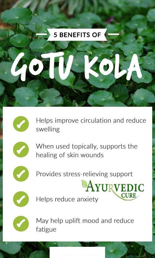 Health Benefits Of Gotu Kola