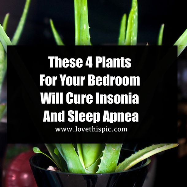 Yet, there is a simple and natural way to improve your sleep and finally get some rest! All you need to do is to place one of the following plants into your bedroom and enjoy the calm and relaxing...