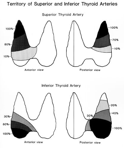 superior thyroid artery branch of ECA on ultrasound - Google Search