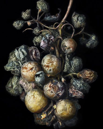 MORE TO LOVE: UNLIKELY GARDENERS. From Karl Blossfeldt's faunal specimen to Araki's suggestive flora, see our pick of great gardens through the lens of photography masters. Photo: Peter Lippmann