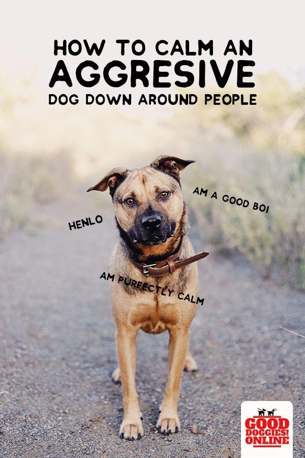 How To Calm Down An Aggressive Dog Aggressive Dog Dog Training