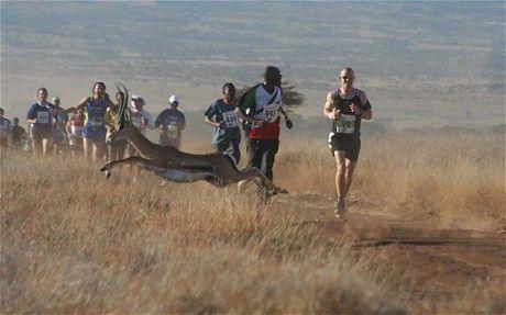 Un marathon et un demi-marathon sont offert dans cette réserve faunique au Kenya. Le prix de la course va à la fondation Tusk pour la préservation de la faune!