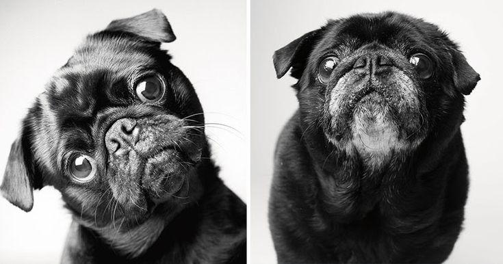 """Em um momento em que o efêmero é supervalorizado, a fotógrafa americana Amanda Jones dedicou seu livro """"Dog Years: faithful friends, then & ..."""