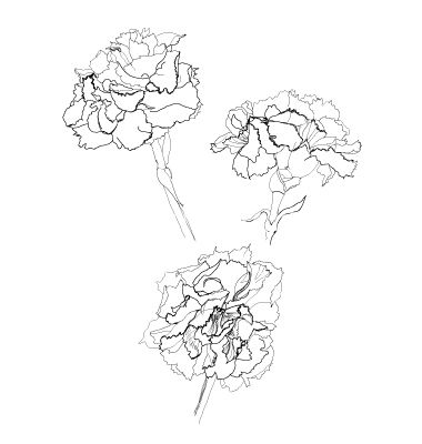 Black And White Carnation Tattoo | www.pixshark.com ...