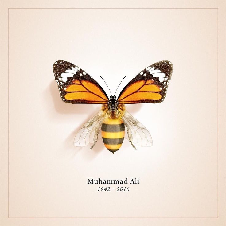 "blue-wrist: "" Muhammad Ali 1942 - 2016 """