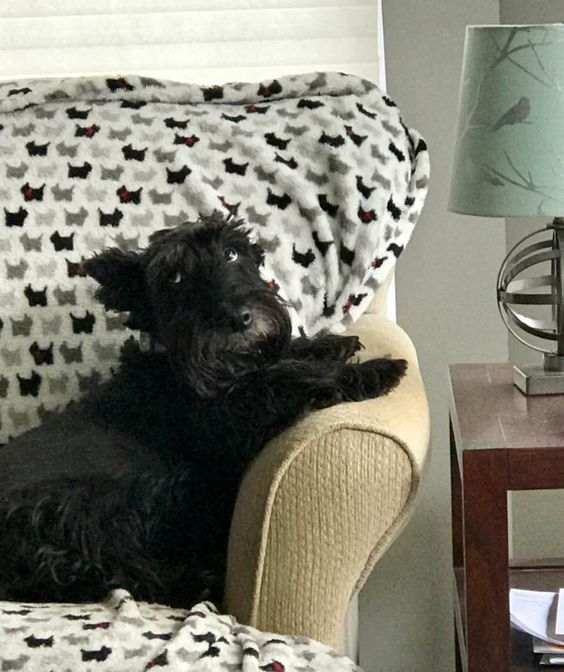 "The Scottie Dog ""side eye"". Jock was a pro at it."