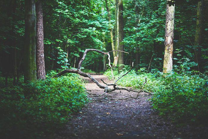 Wil je ook hardlopen of hiken? Maak dan niet dezelfde beginnersfouten die ik maakte! Je leest ze alle 10 op www.insideandout.nl! - hiking lopen wandelen rennen hardlopen joggen tips lifehacks