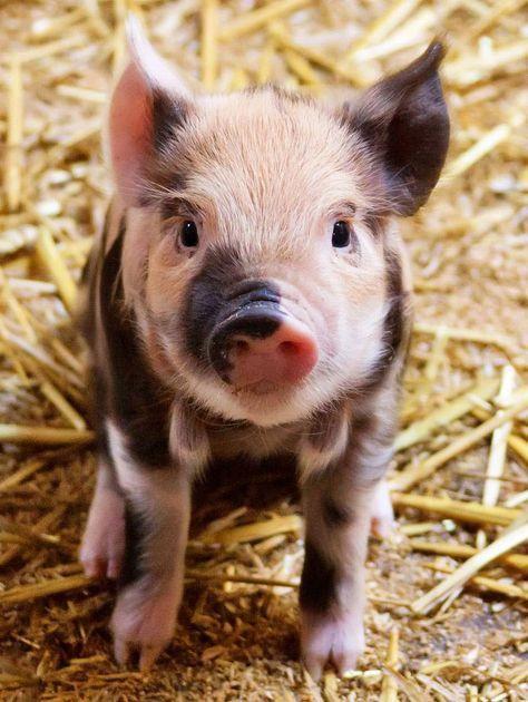5 Gründe warum Du kein Fleisch essen solltest #vegan #vegetarisch #Tierschutz…