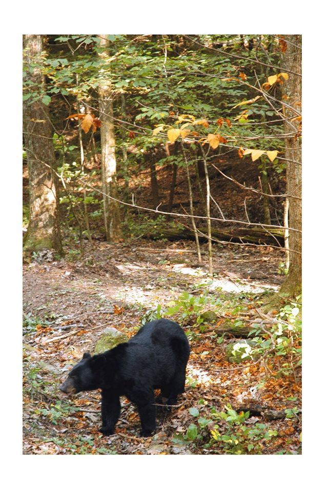 136 best animal friends in the smokies images on pinterest for Jackson cabins gatlinburg tenn
