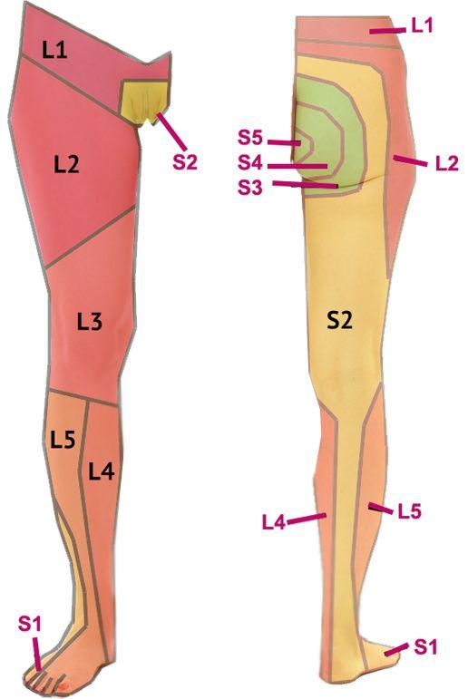 Afbeeldingsresultaat voor dermatoom L3