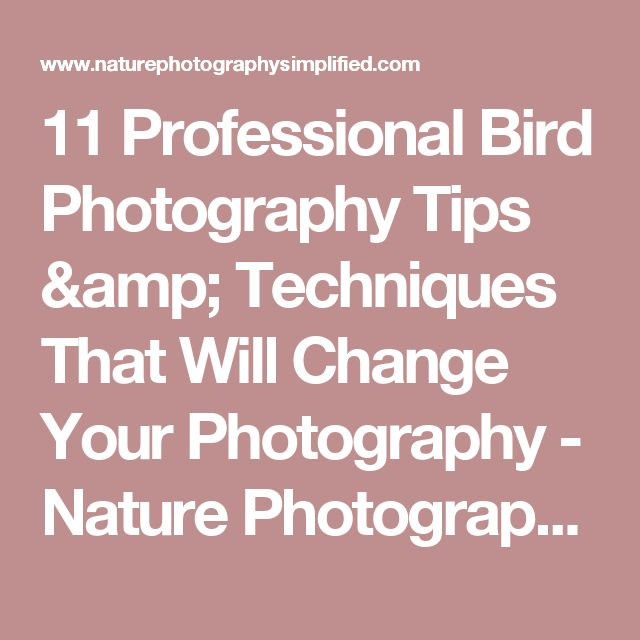 11 Professional Bird Photography Tips & Techniques That Will Change Your Photography - Nature Photography Simplified