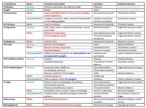 Cranial Nerves and Functions Excel Spread Sheet