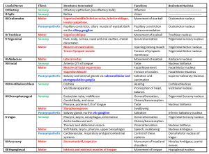 25+ best ideas about Cranial nerves on Pinterest | Cranial nerves ...
