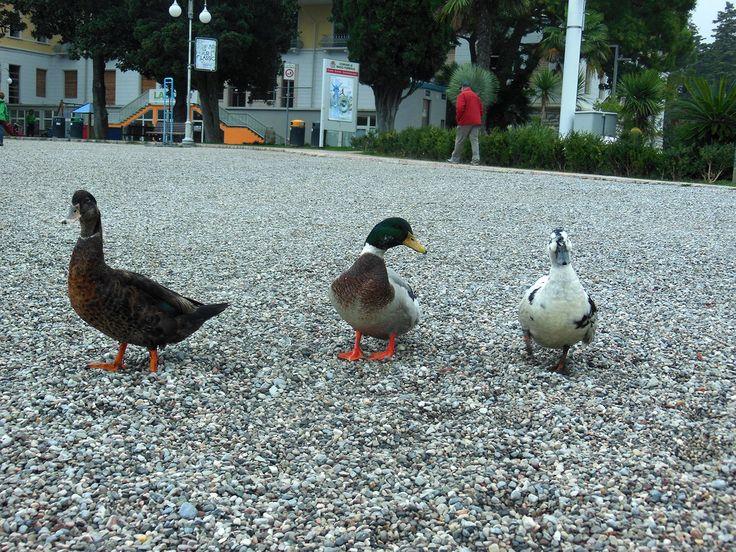 Matilda, Hector și vărul Vasile (stg.) vă transmit salutări de pe Lacul Garda din Italia.