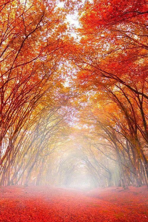 Path in autumn, Reghin, Romania.