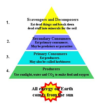 Ecological Pyramids Worksheet Answers - ecological and pyramids ...