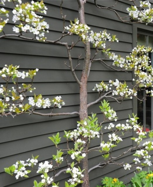 Good idea: grey wall, with white flowers