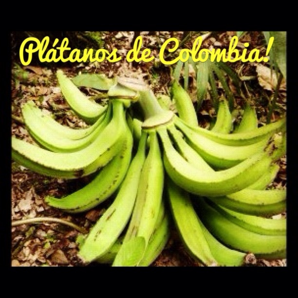 Colombian bananas!