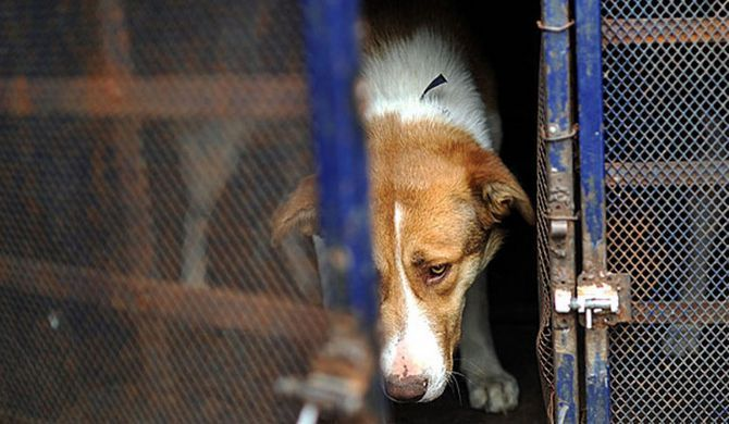 Atrocities will never be forgotten. The videos & pictures on this homepage are mainly about a systematic abuse of animals, filmed in locations like municipal shelters etc.