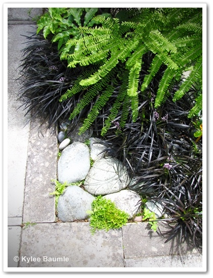 love the colors of these plants togetherMondo Grass, Front Walks, Beautiful Mixed, Plants, Colors Combinations, Paint Colors, Color Combinations, Black Mondo, Corner Ideas