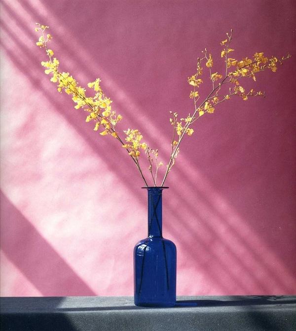 Robert Mapplethorpe - Flowers