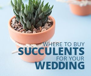If you're planning to use succulents for your wedding this is the post for you. Learn where to get succulents for bouquets, favors and centerpieces!