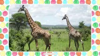 Učíme sa zvieratká: Zvieratká z farmy - YouTube