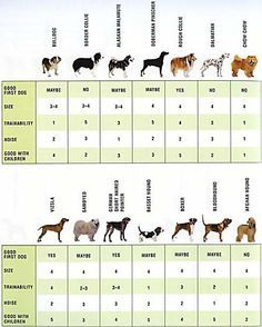 CHOOSING A DOG BREED On a scale of 1 to 5, 1 is the minimum level and 5 is the maximum for each feature.