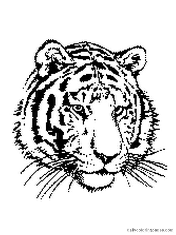 1000 images about Coloring Tigers