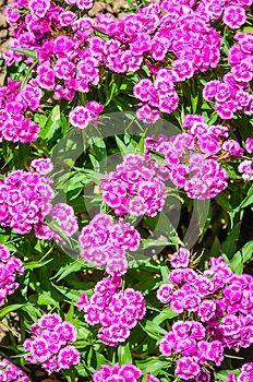 AlveraPhoto in Microstock World: Spring flowers for sale