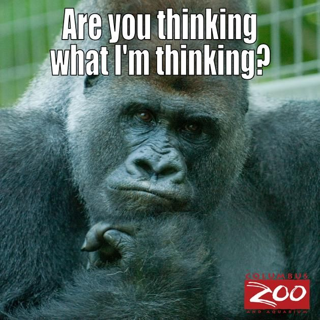 Funny Zoo Meme : Best images about columbus zoo on instagram