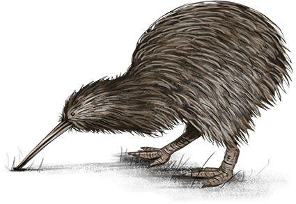 Kiwi.png (425×293)