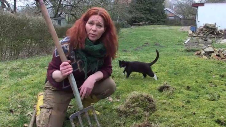 De simple tricks, der fjerner mos i din græsplæne - TV 2