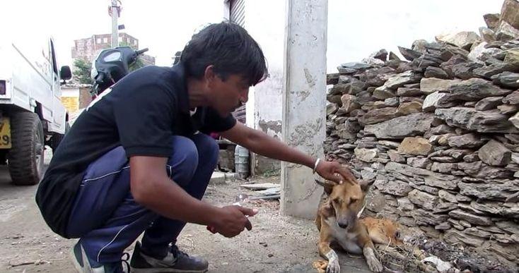 https://mur.tv/wp-content/uploads/2016/12/3-53.jpg В Индии пёс заживо гнил на улице... Но он смог снова стать здоровым и счастливым!!! - https://mur.tv/2016/12/25/v-indii-pyos-zazhivo-gnil-na-ulice-no-on-smog-snova-stat-zdorovym-i-schastlivym/