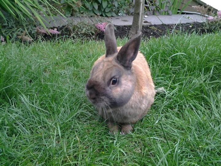 Dinky mijn konijn