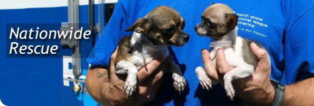 Rescue Alert: 40 Small Dogs Rescued From Imminent Euthanasia - North Shore Animal League America