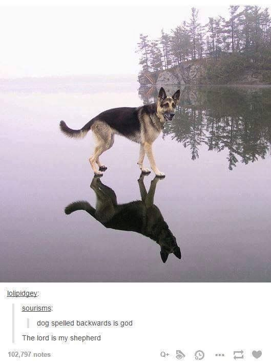 WHAT|| it's clearly a sign that the dog is gonna have to fight the shadow version once it reaches the center of the lake...
