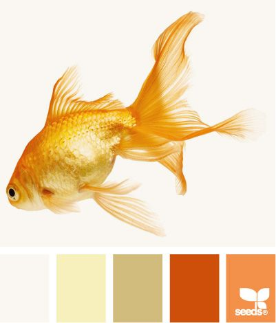 white tan orange