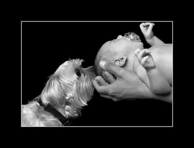 newborn and dog- good idea with some slight tweaks.