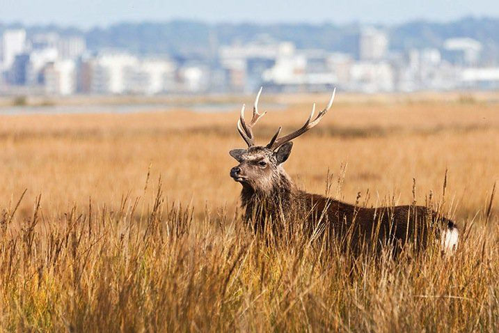 The 4 Ps – Tips for Improving Your Wildlife Photography