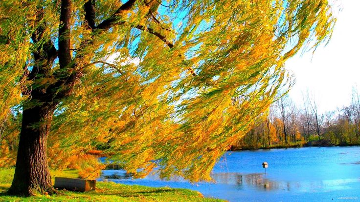 """The Willow Tree"""" Images - YouTube"""