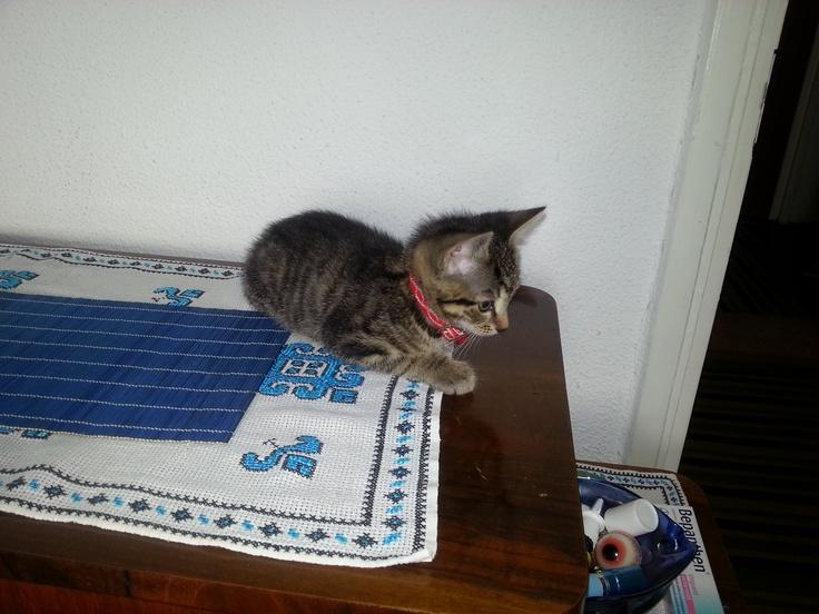 Good cat :-)