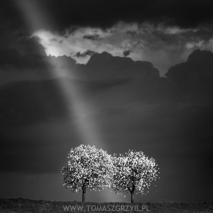 Rainbow © Tomasz Grzyb
