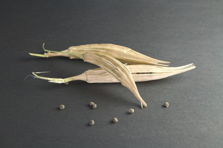 Okra Seed Harvesting: Information About Collecting And Saving Okra Seed Pods